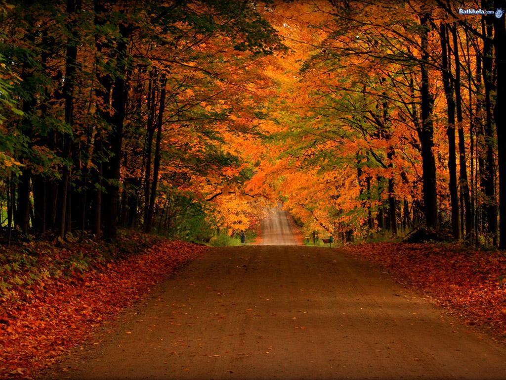 Autumn Wallpaper - Apps on Google Play