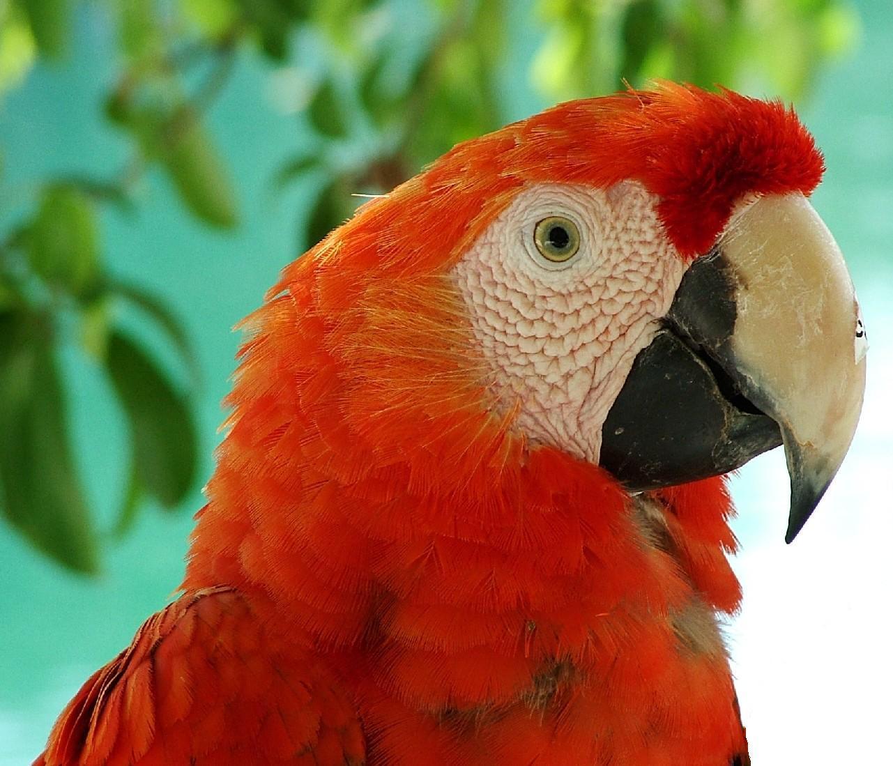 tropical birds wallpaper tropical birds 1281x1099
