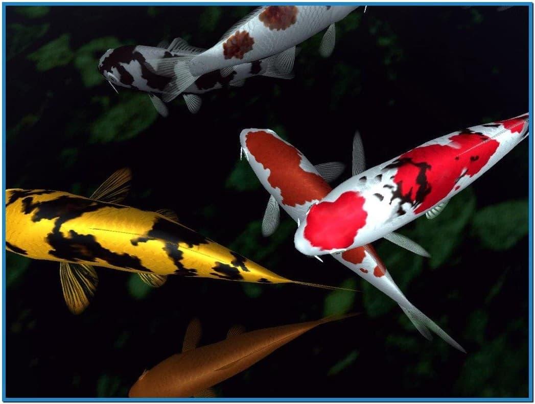 49 animated koi wallpaper on wallpapersafari for Koi pond screensaver