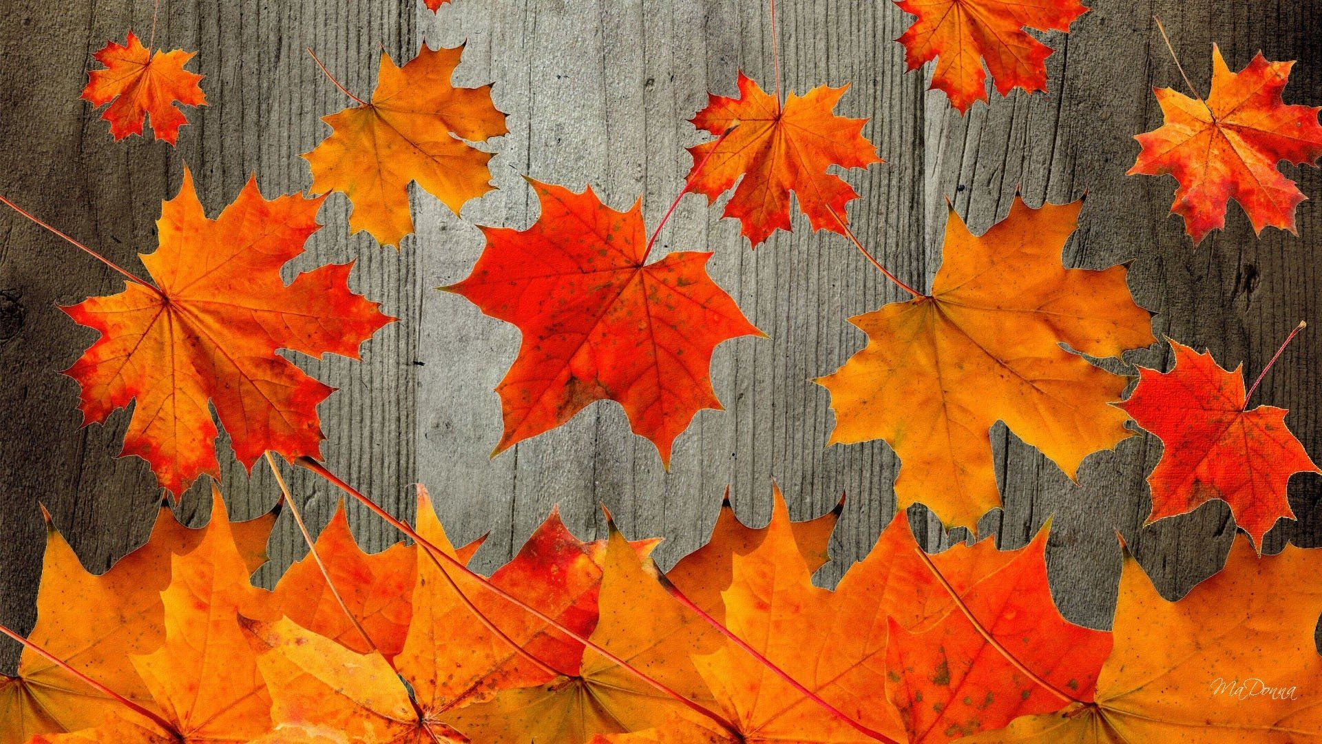 Fall Desktop Wallpapers   Top Fall Desktop Backgrounds 1920x1080