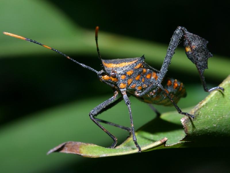 Moving insect wallpaper wallpapersafari - Moving spider desktop ...