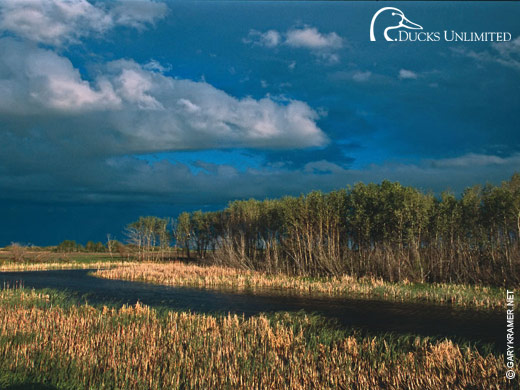 Ducks Unlimited Wallpapers For Iphone   Website of gawerake 520x390