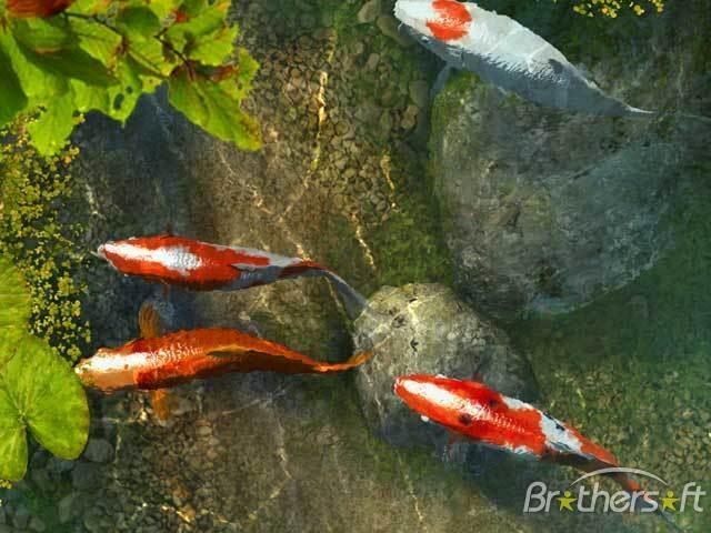 Free Download Download Koi Fish 3d Screensaver Koi Fish 3d