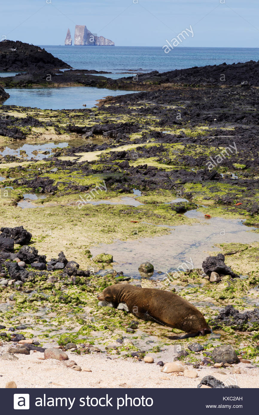 Isla Santa Cruz Island sea lion on the beach Kicker Rock in the 866x1390