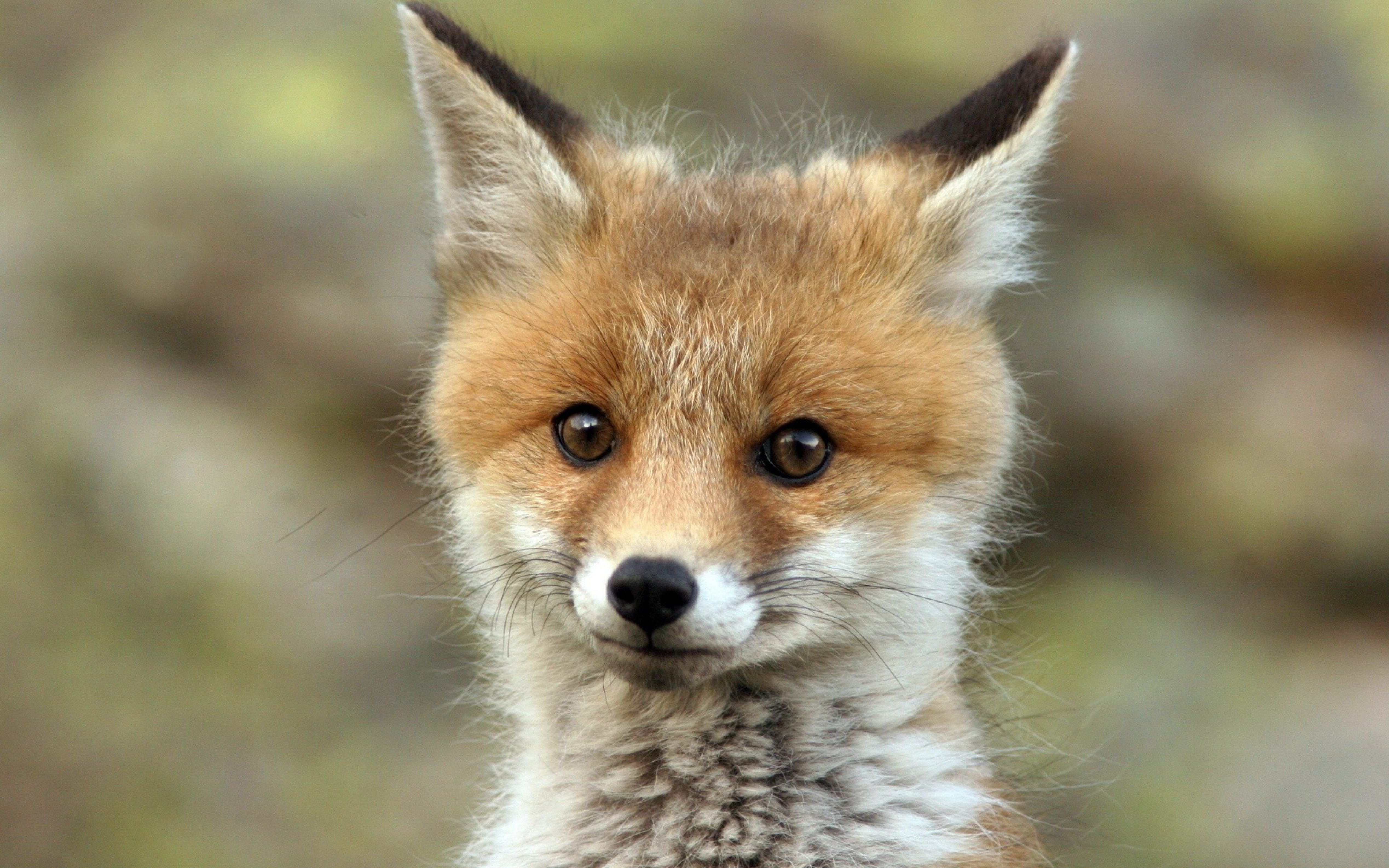 Cute Baby Fox Wallpaper Images Pictures   Becuo 5075x3172
