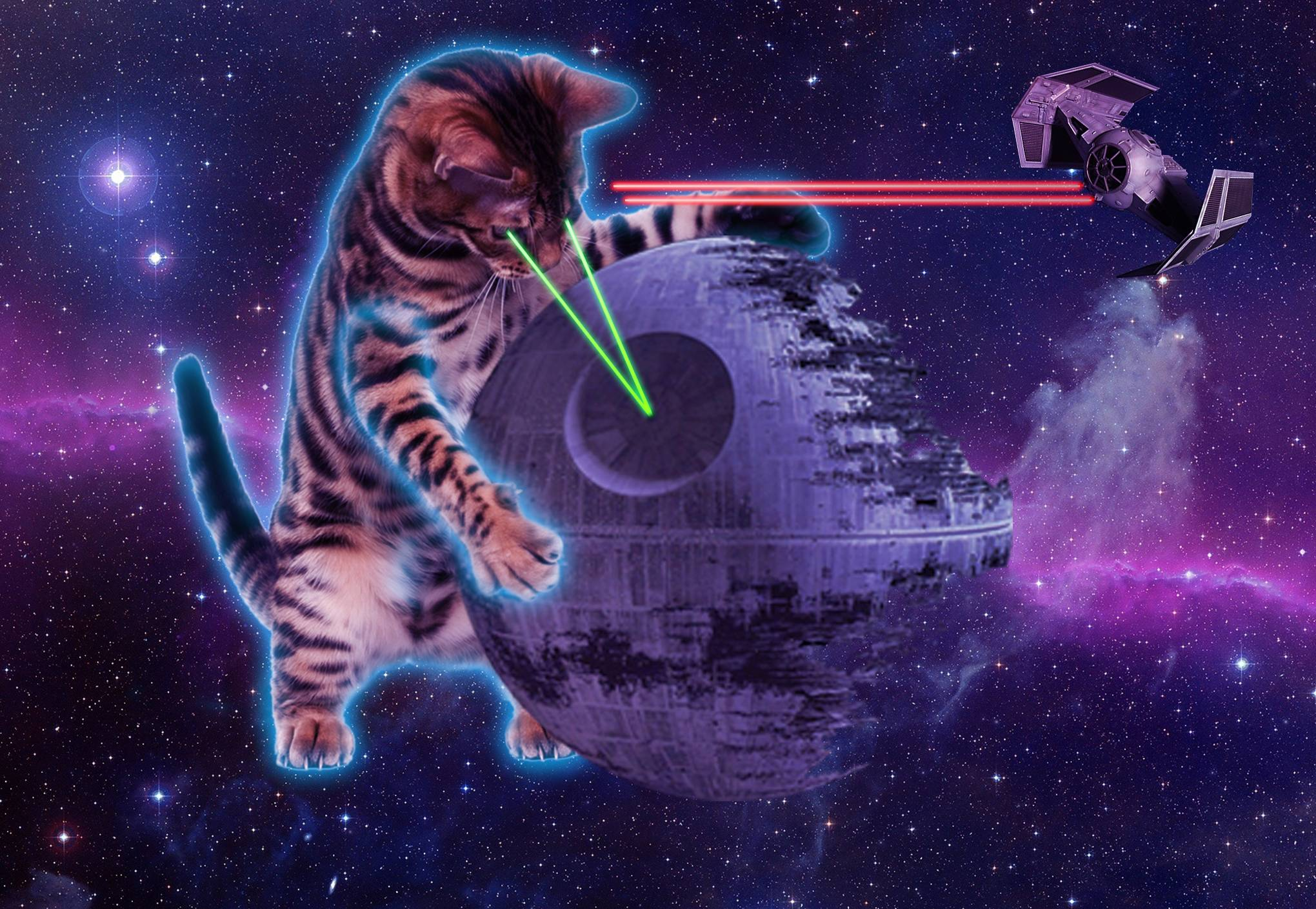 45 Space Kitty Wallpapers   Download at WallpaperBro 2040x1409