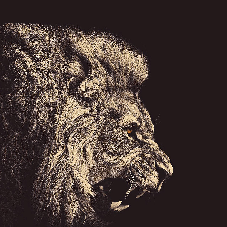 45 Lion Iphone Wallpaper On Wallpapersafari