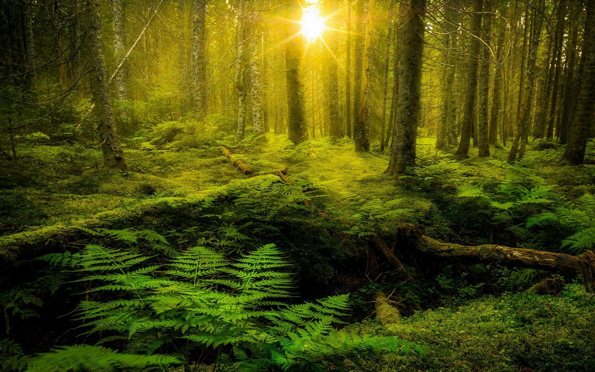 26 Forest Moss Wallpapers On Wallpapersafari
