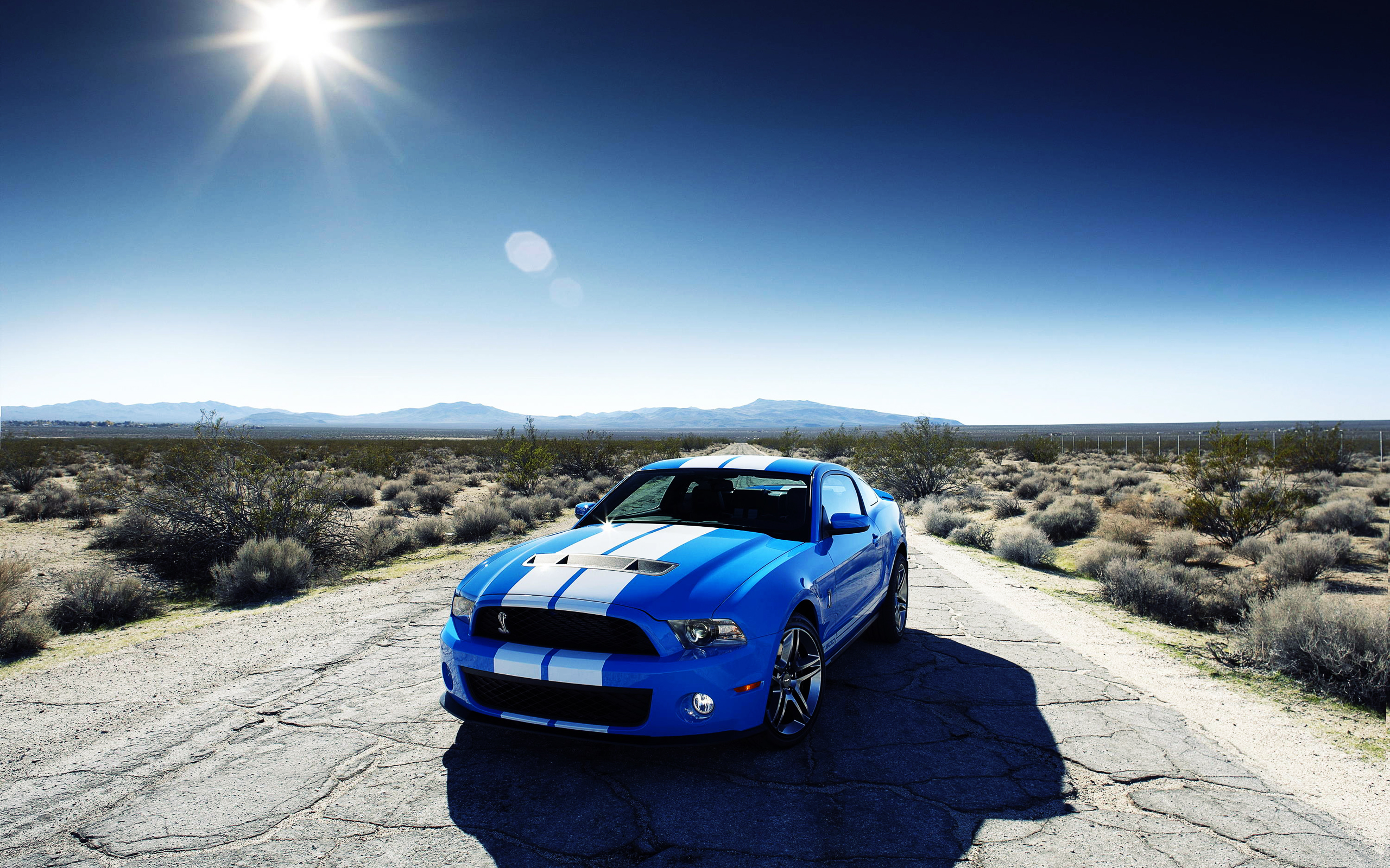 Ford Shelby GT500 Car Wallpapers HD Wallpapers 2560x1600