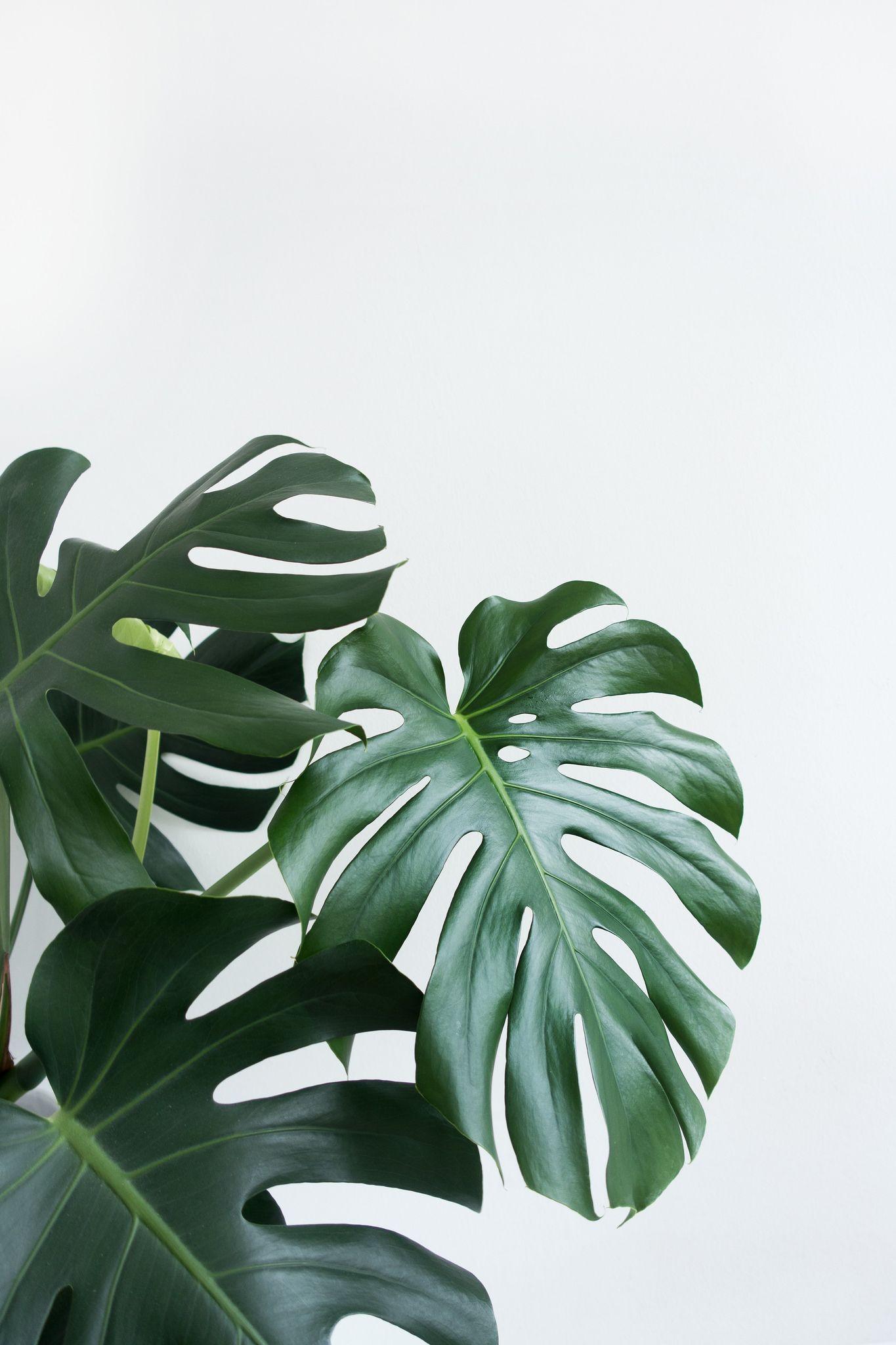 Minimalist Plant Wallpapers   Top Minimalist Plant 1365x2048