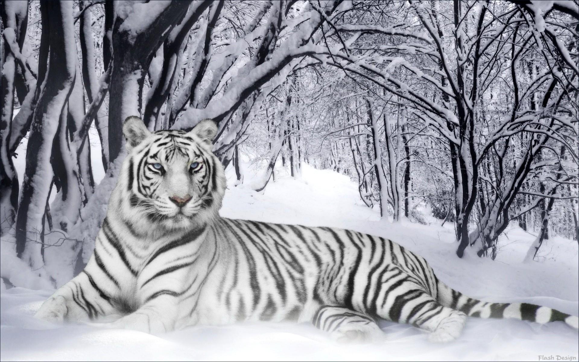 achtergrond screensavers wit tijger wallpaper   ForWallpapercom 1920x1200