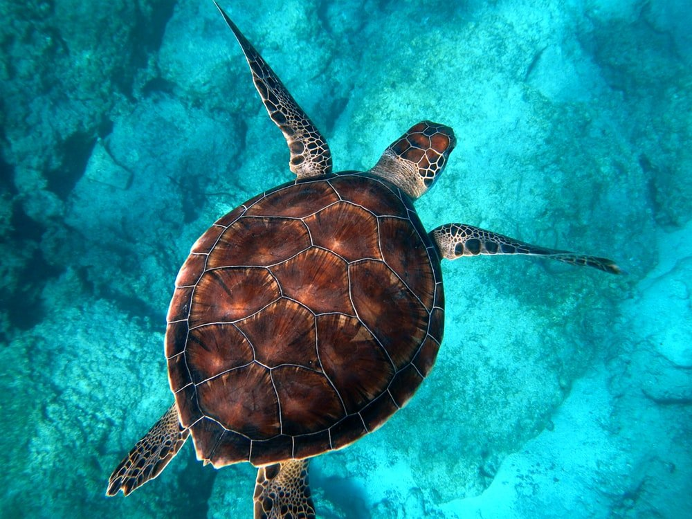 500 Turtle Pictures Download Images on Unsplash 1000x750