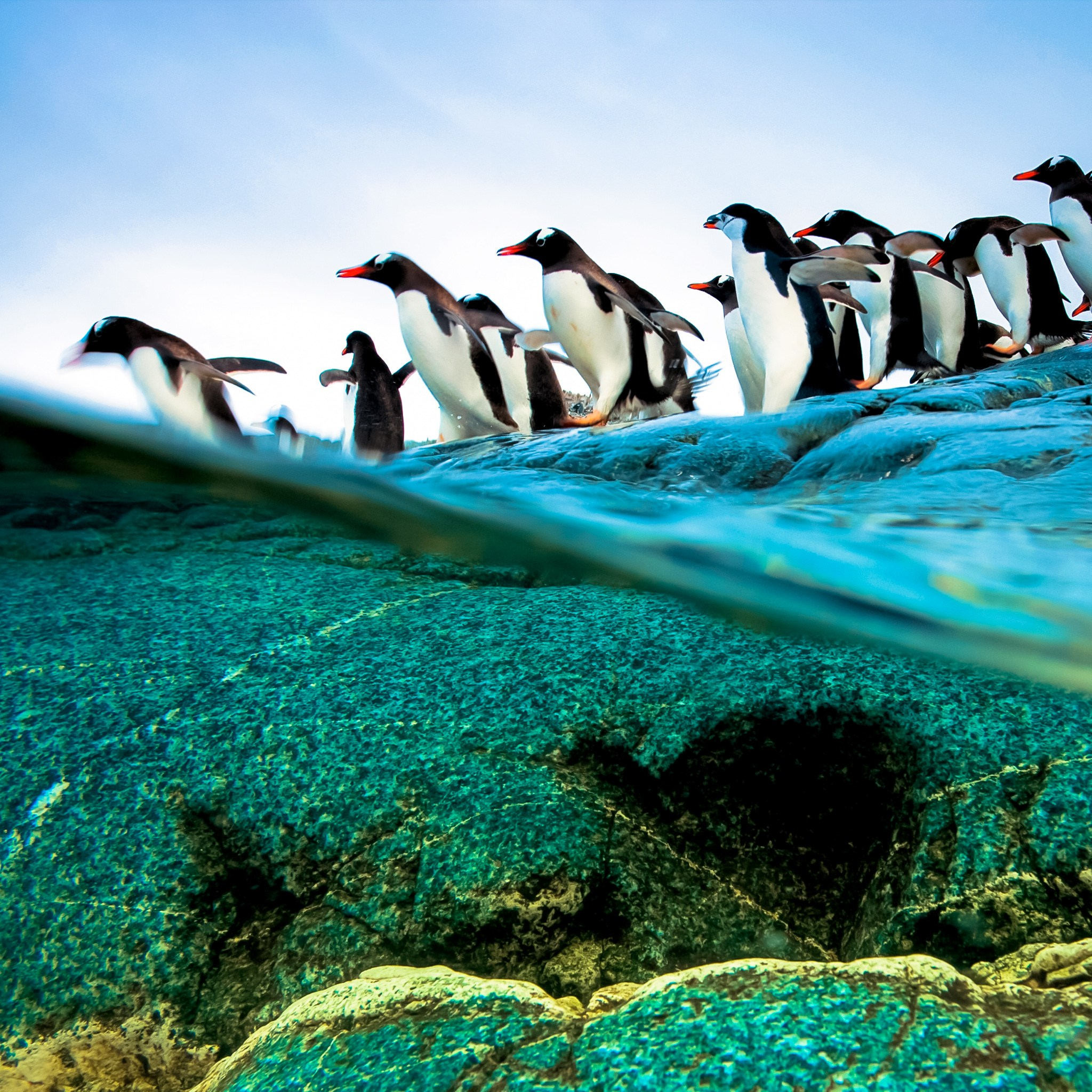 Diving Penguins Beautiful Retina iPad Wallpapers 2048x2048