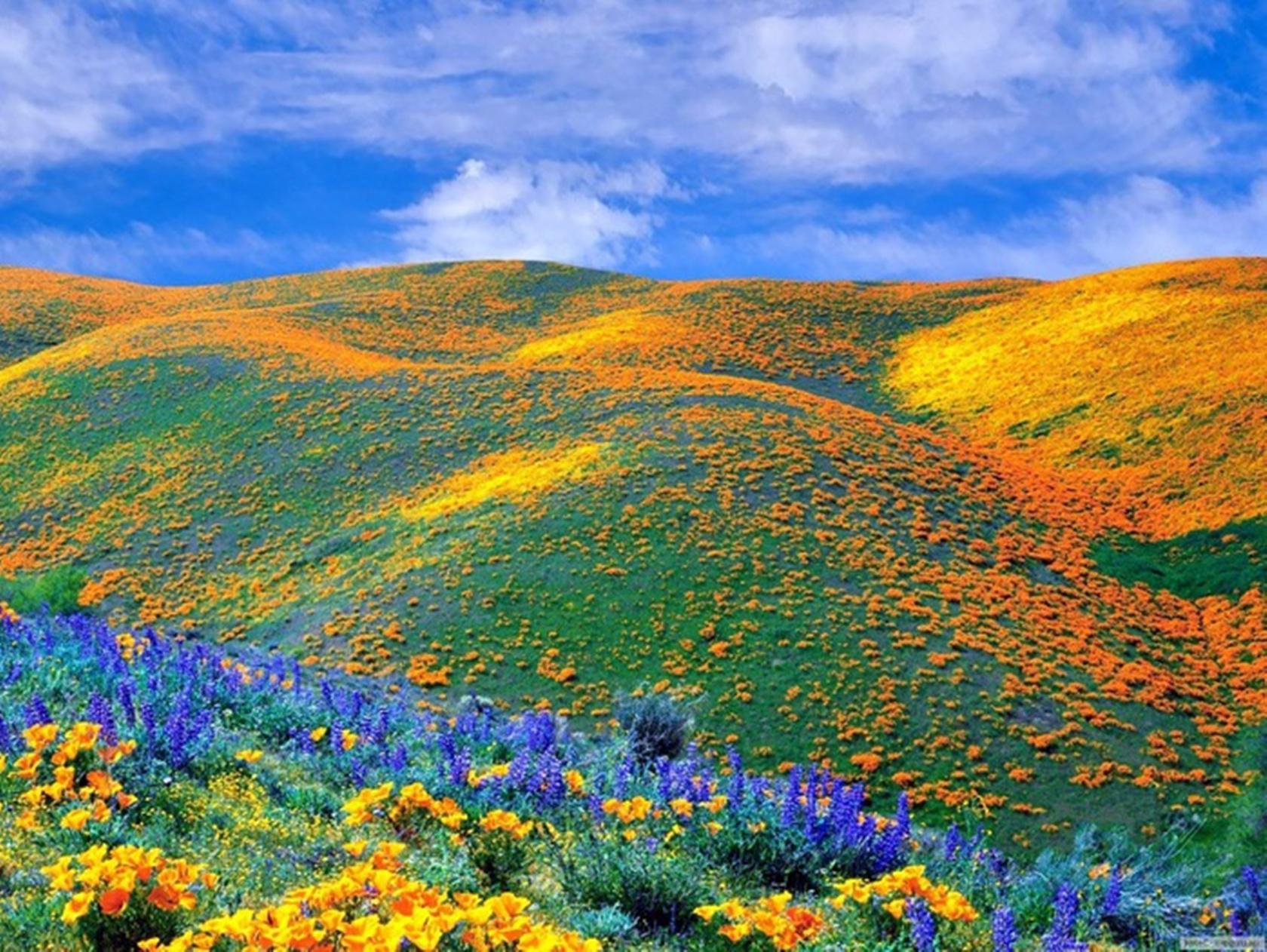 Colorful Nature Wallpapers - WallpaperSafari