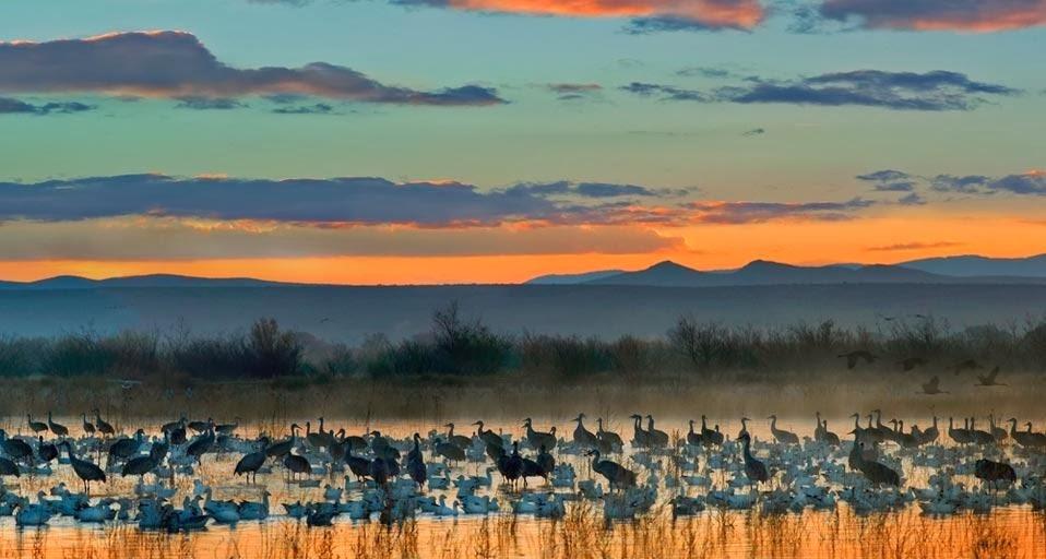 del Apache National Wildlife Refuge near Socorro New Mexico US 958x512