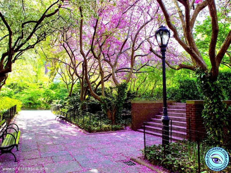 View Spring Park Picture Wallpaper in 800x600 Resolution 800x600