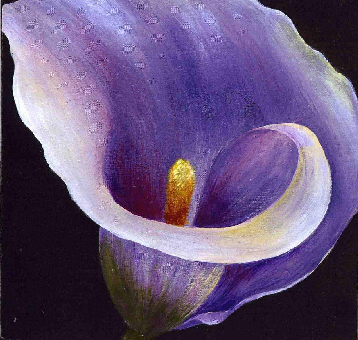1247x1186px Calla Lilies Wallpaper Wallpapersafari