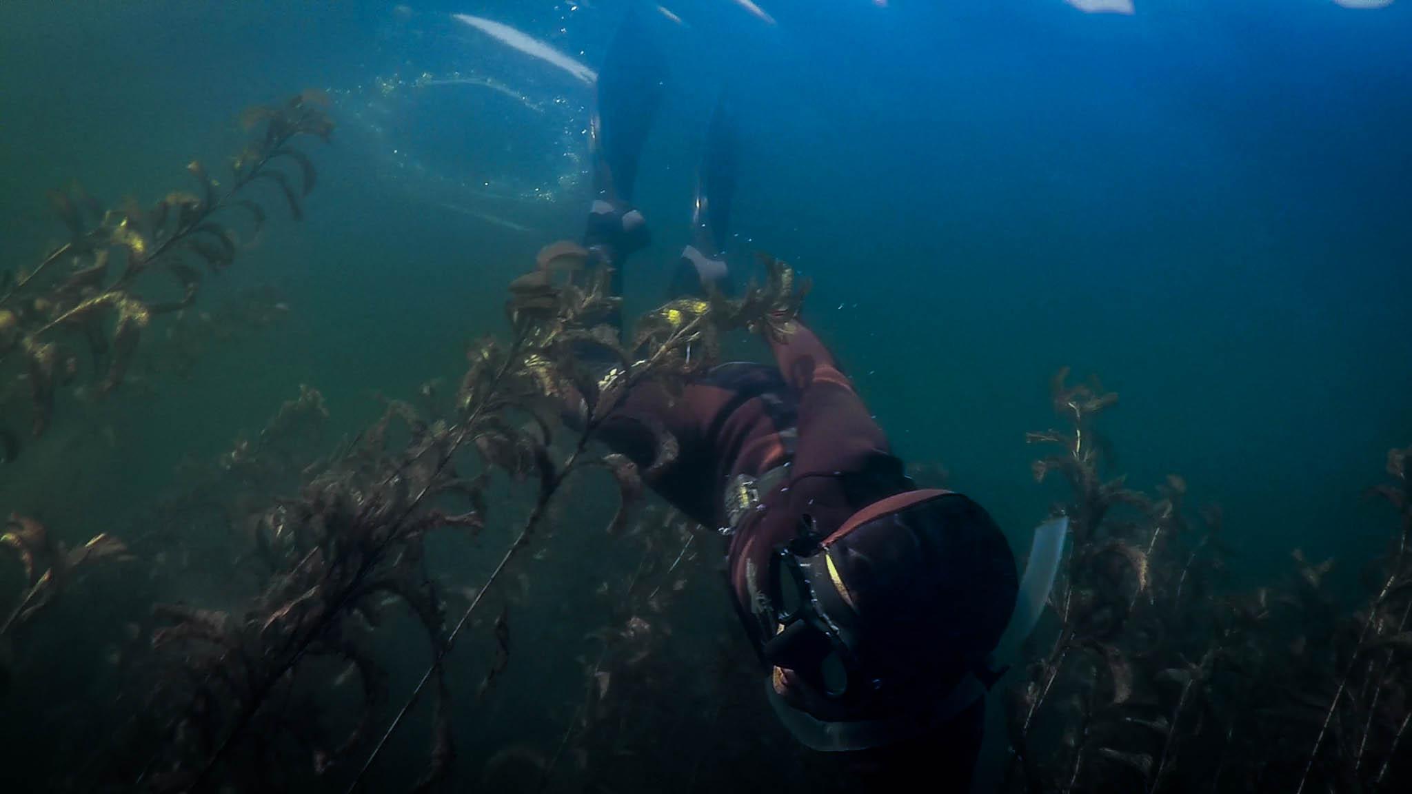 Maine Diving Seaunseen 2048x1152
