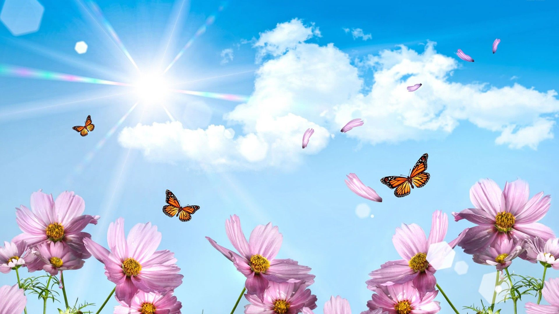 Wallpaper HD Hello Spring Spring wallpaper Butterfly wallpaper 1920x1080