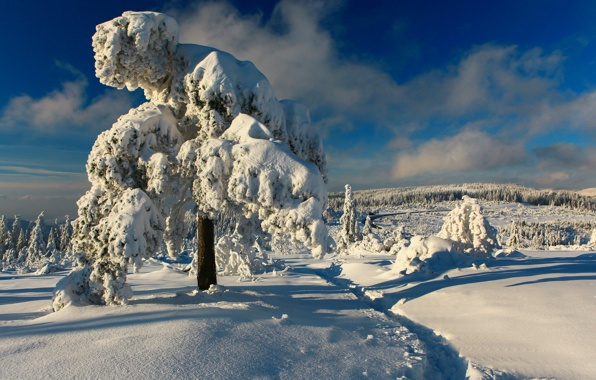 Wallpaper black forest germany black forest germany winter snow 596x380