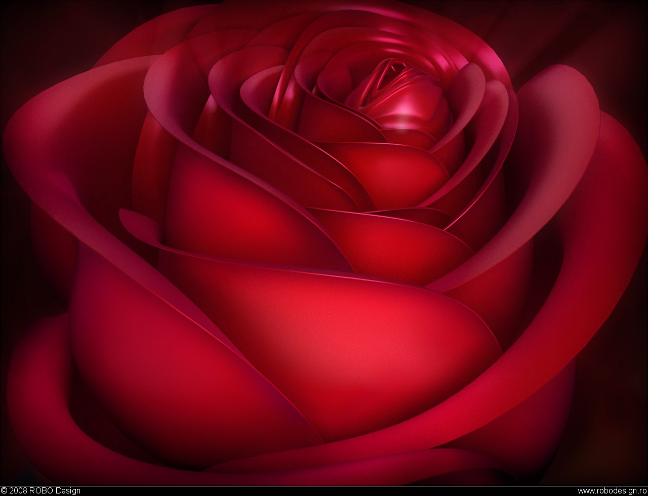 Download Valentine Red Rose Wallpapers Wallpapers Area 1280x980