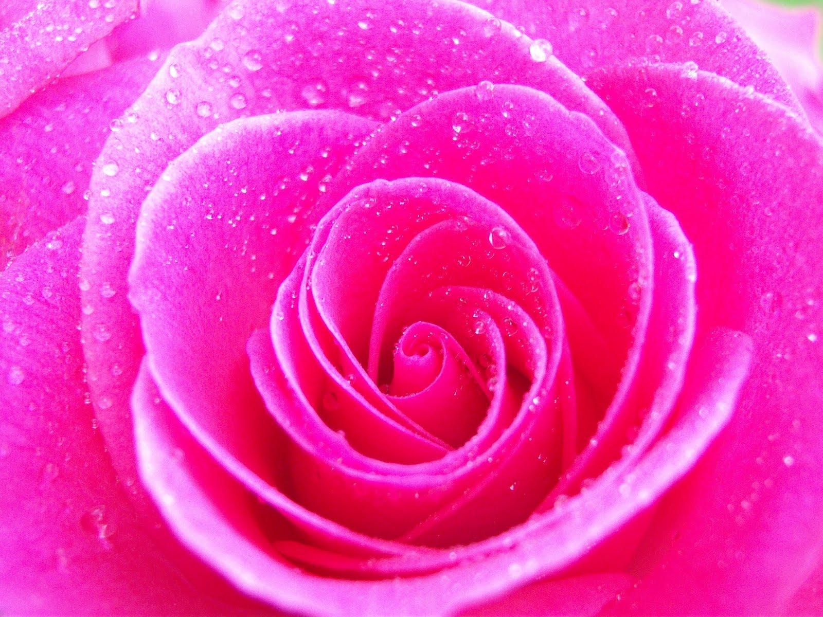 pink flower wallpaper 1600x1200
