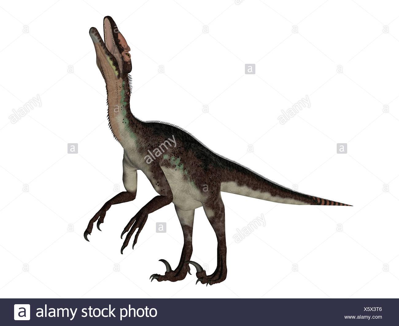 utahraptor dinosaur isolated on white background Stock Photo 1300x1063