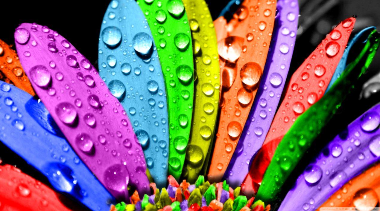 Free Download Beautiful Flowers Colorful Wallpaper Desktop Hd