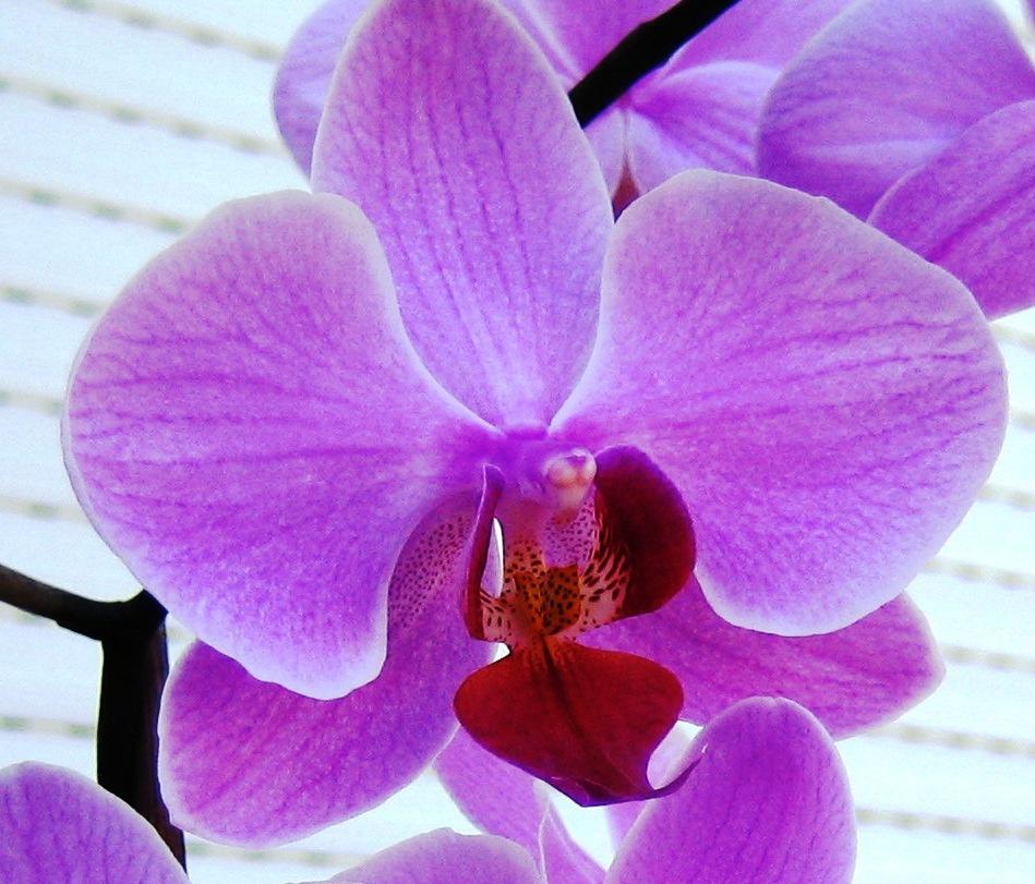 beautiful orchid flower wallpaper  wallpapersafari, Beautiful flower