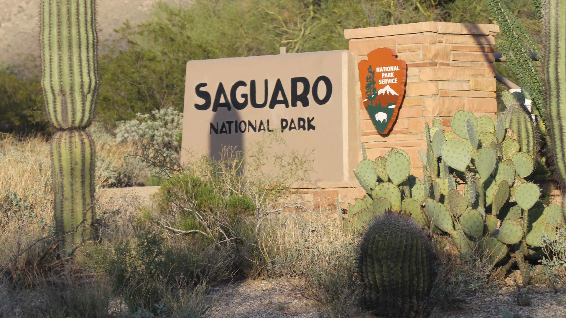 Record Numbers Visit Saguaro National Park Mirroring National 1920x1080