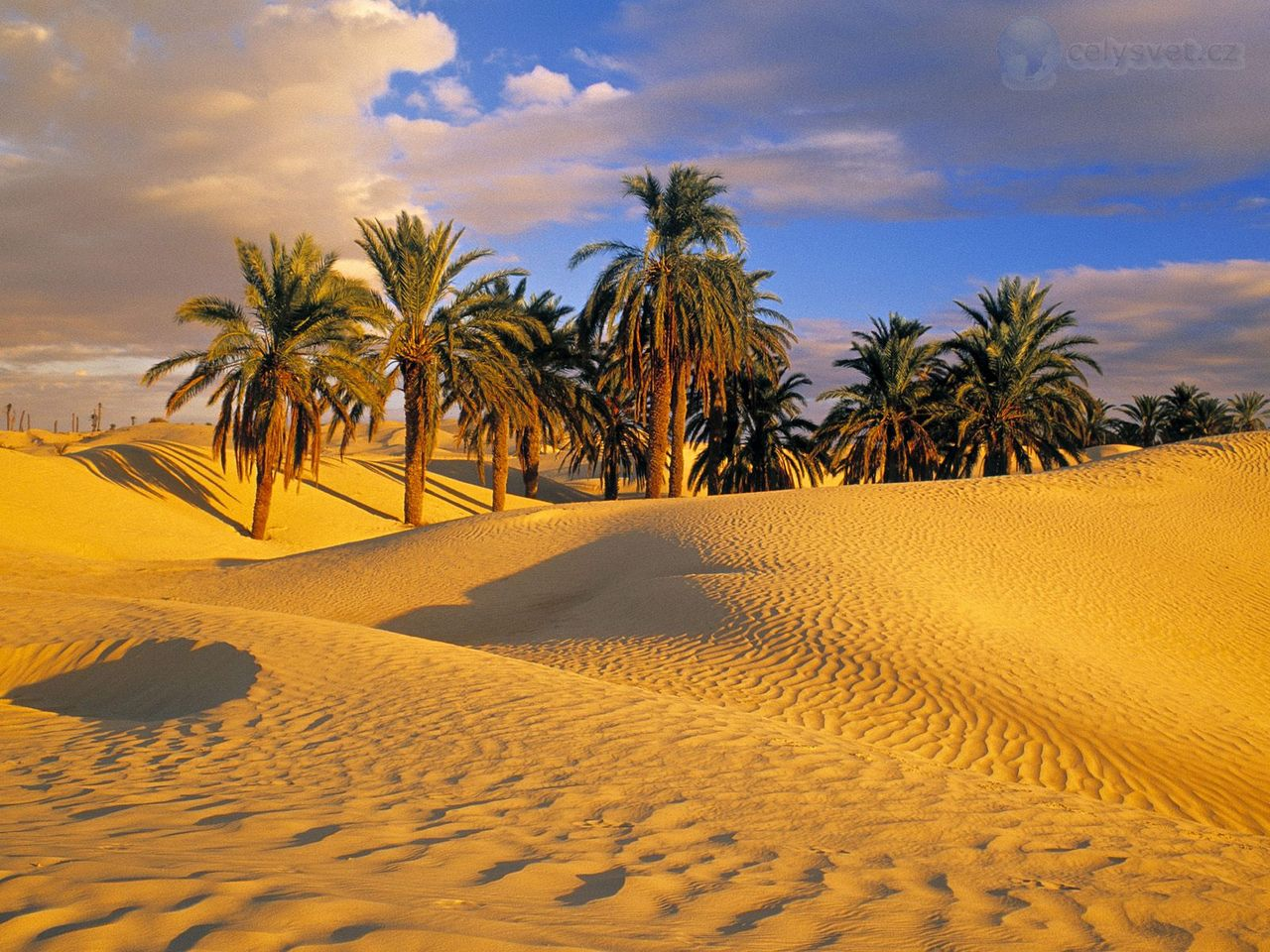 Desert Oasis Wallpaper - WallpaperSafari Oasis Landscape Wallpaper