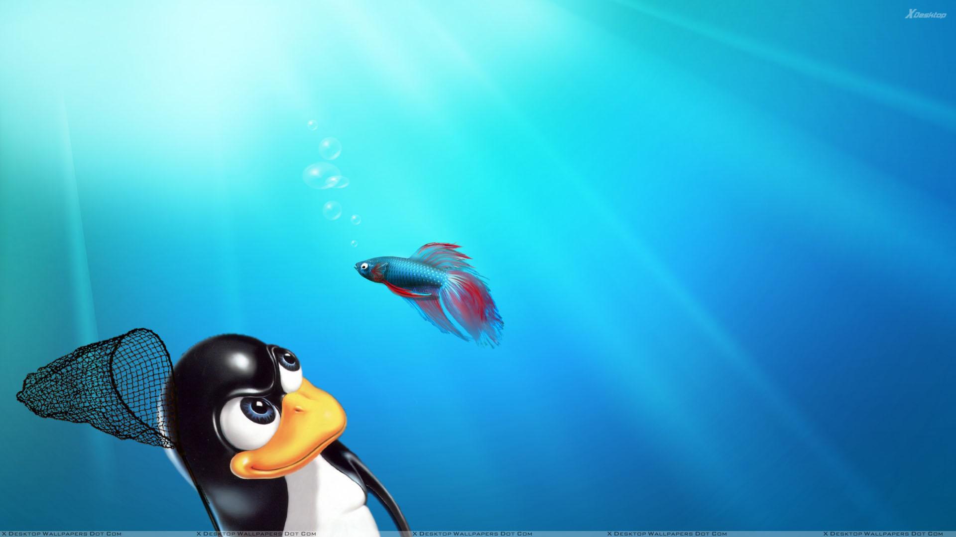 Linux vs Windows Blue Background Wallpaper 1920x1080