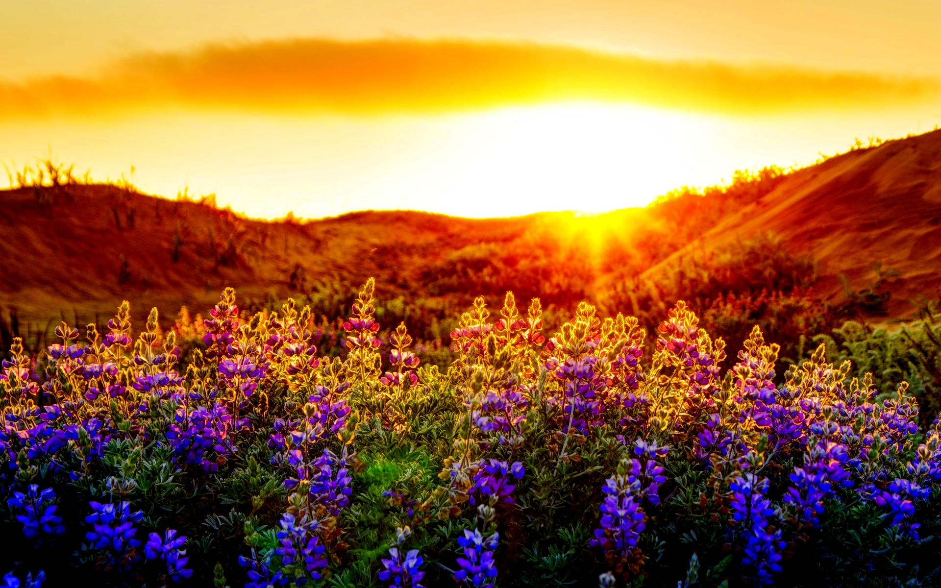 Related Wallpaper for Sunset Summer Wallpaper Backgrounds 1920x1200