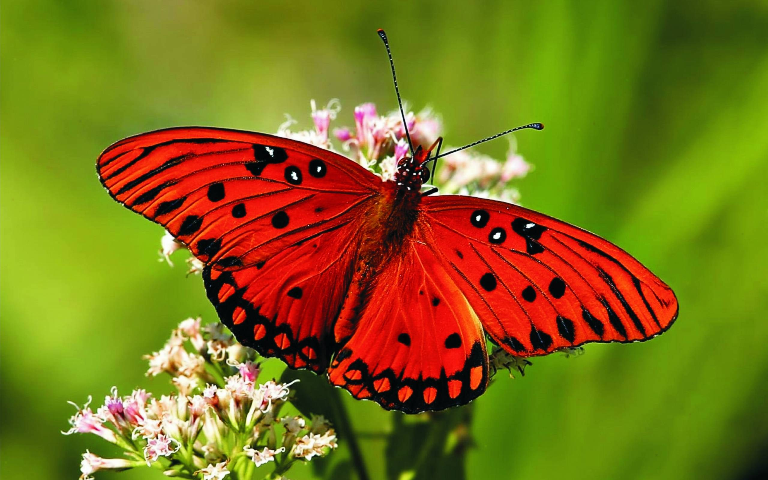 Wallpaper With Butterflies