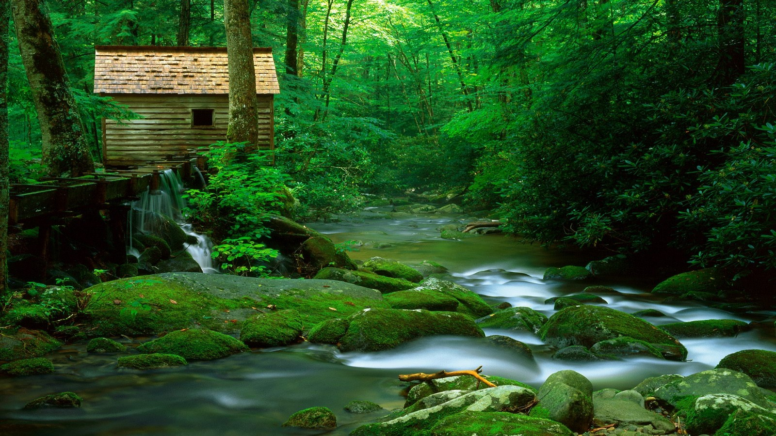 Free Desktop Wallpaper Nature Forest ~ cool hd wallpapers