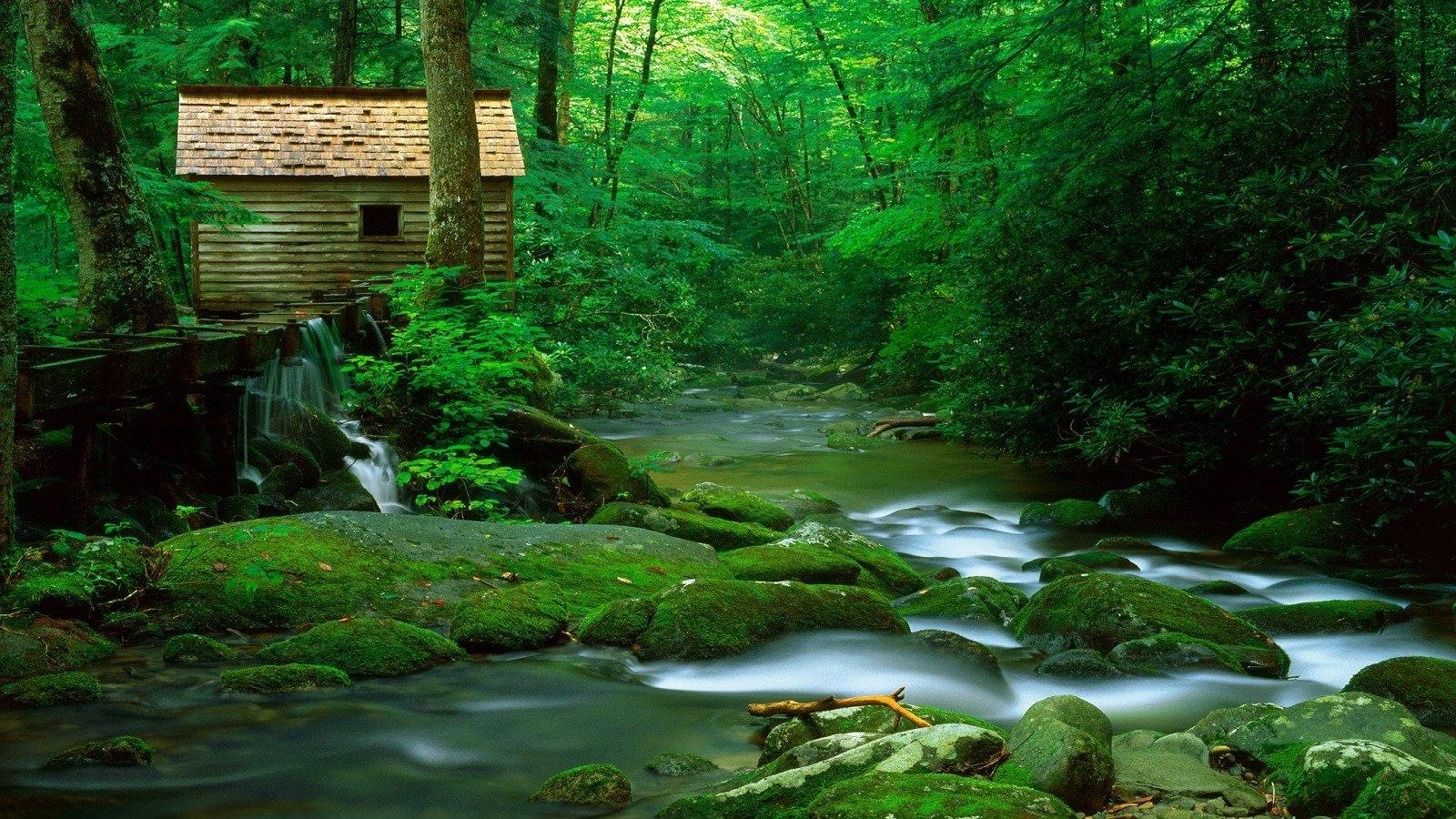 Hd wallpaper nature green - Free Desktop Wallpaper Nature Forest Cool Hd Wallpapers