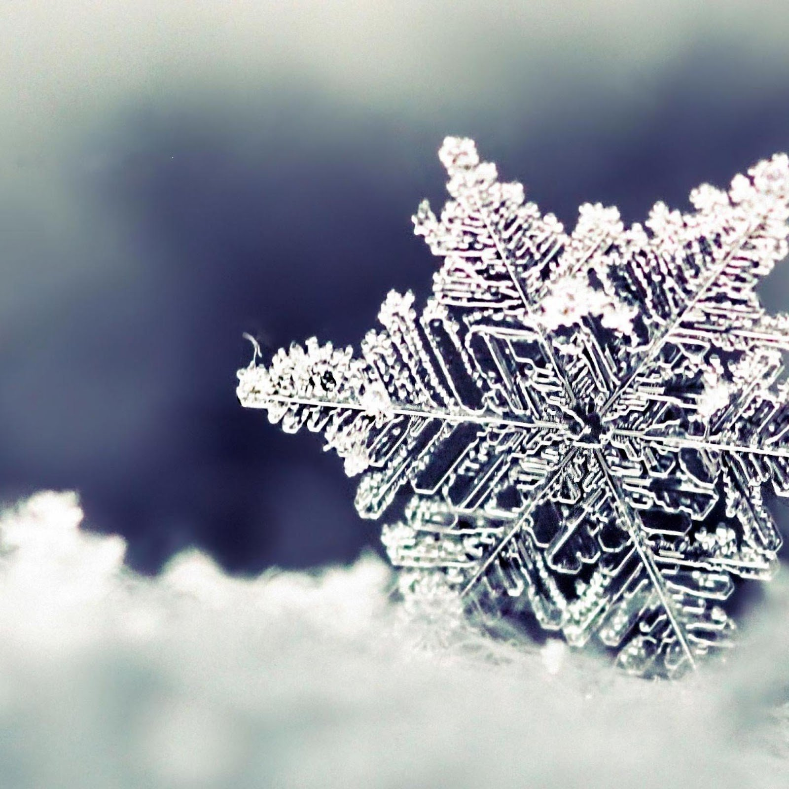 Winter Themed HD Wallpapers for iPad 4   Gadgets Apps and Flash Games 1600x1600