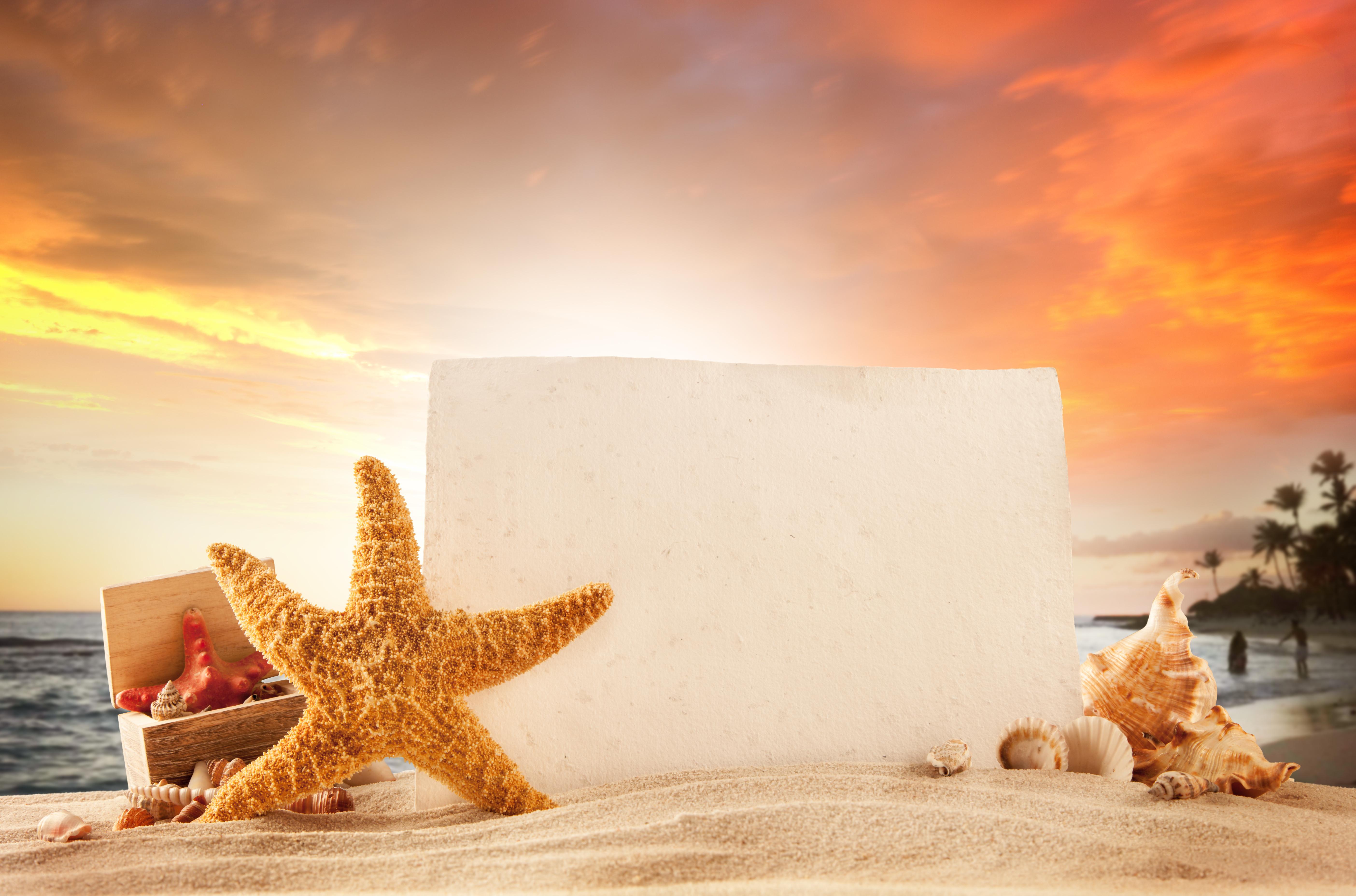 starfish beach sand summer sea vacation sun wallpapers photos