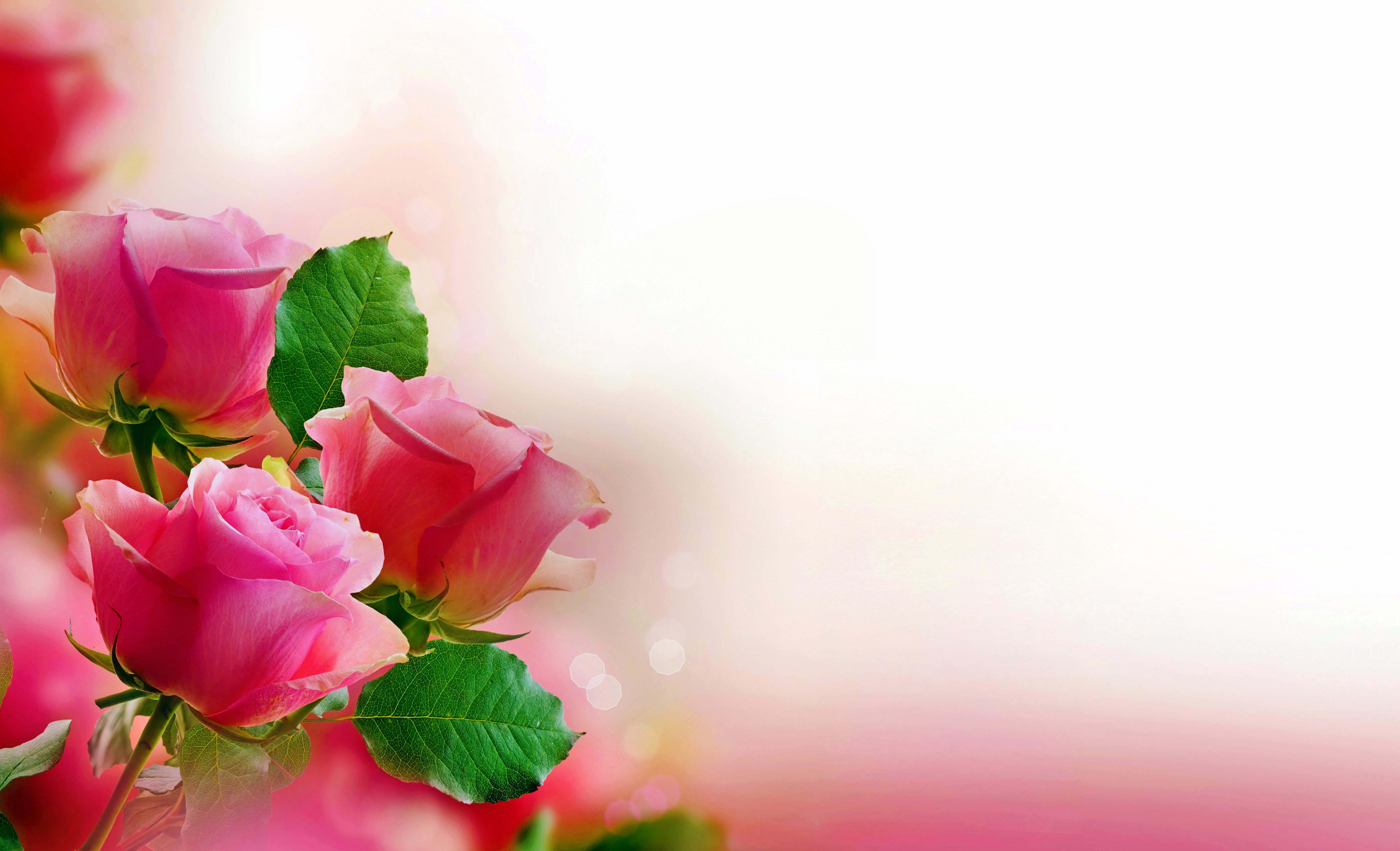 роза,лепестки,листья  № 705595 загрузить