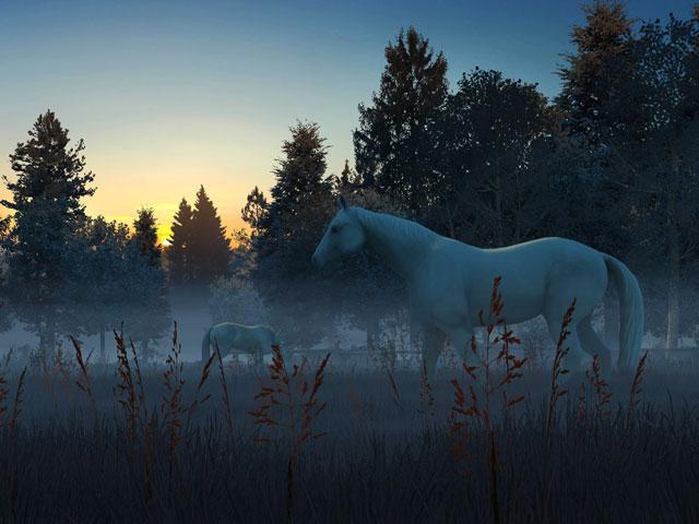 Nature 3D Screensavers   Fog Horses   Live wallpaper a foggy dawn 640x480