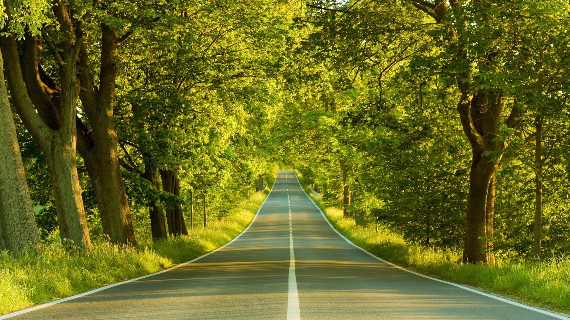 Landscapes Nature Wallpaper 1920x1080 Landscapes Nature Trees Roads 1920x1080