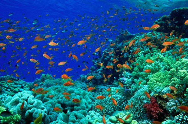 Coral Reef Wall Mural   Natural World   Photographic 605x400