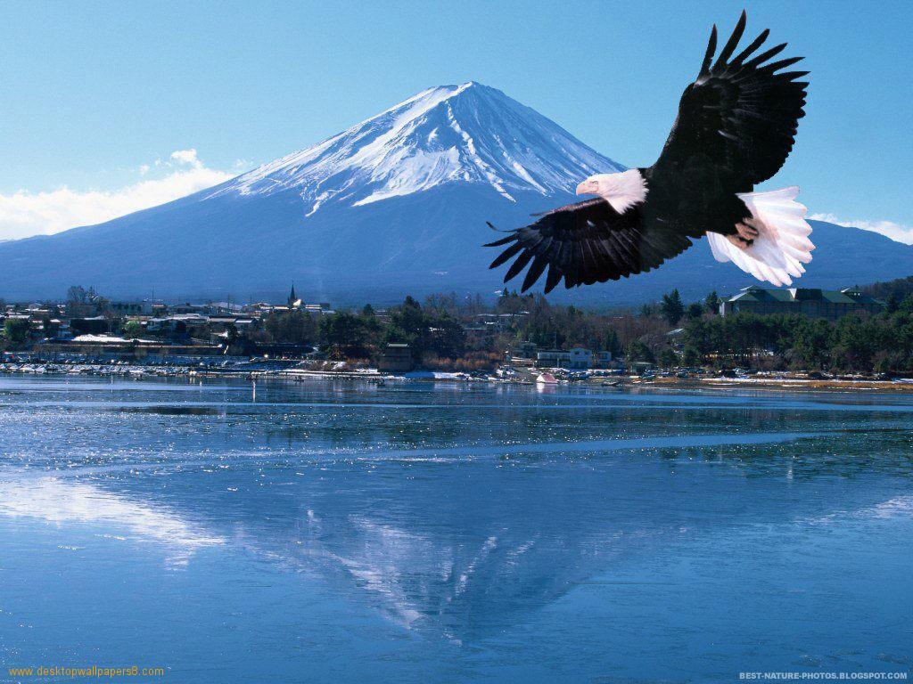 Animal Desktop Wallpapers Best Eagle Desktop Wallpaper 1024x768