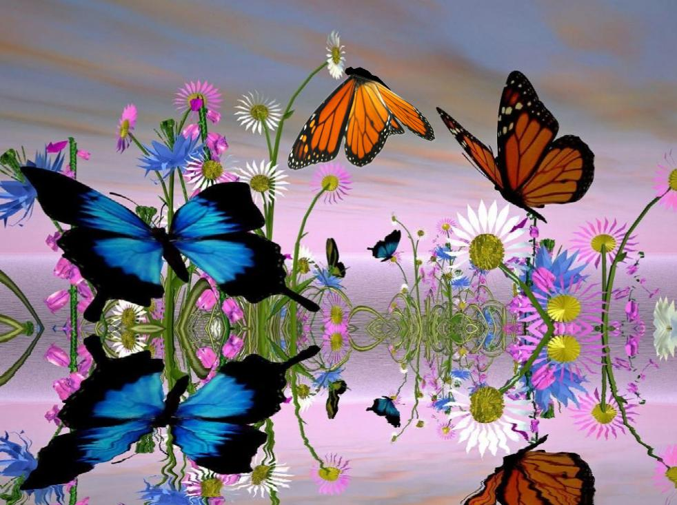 Free Wallpapers And Screensavers Butterflies