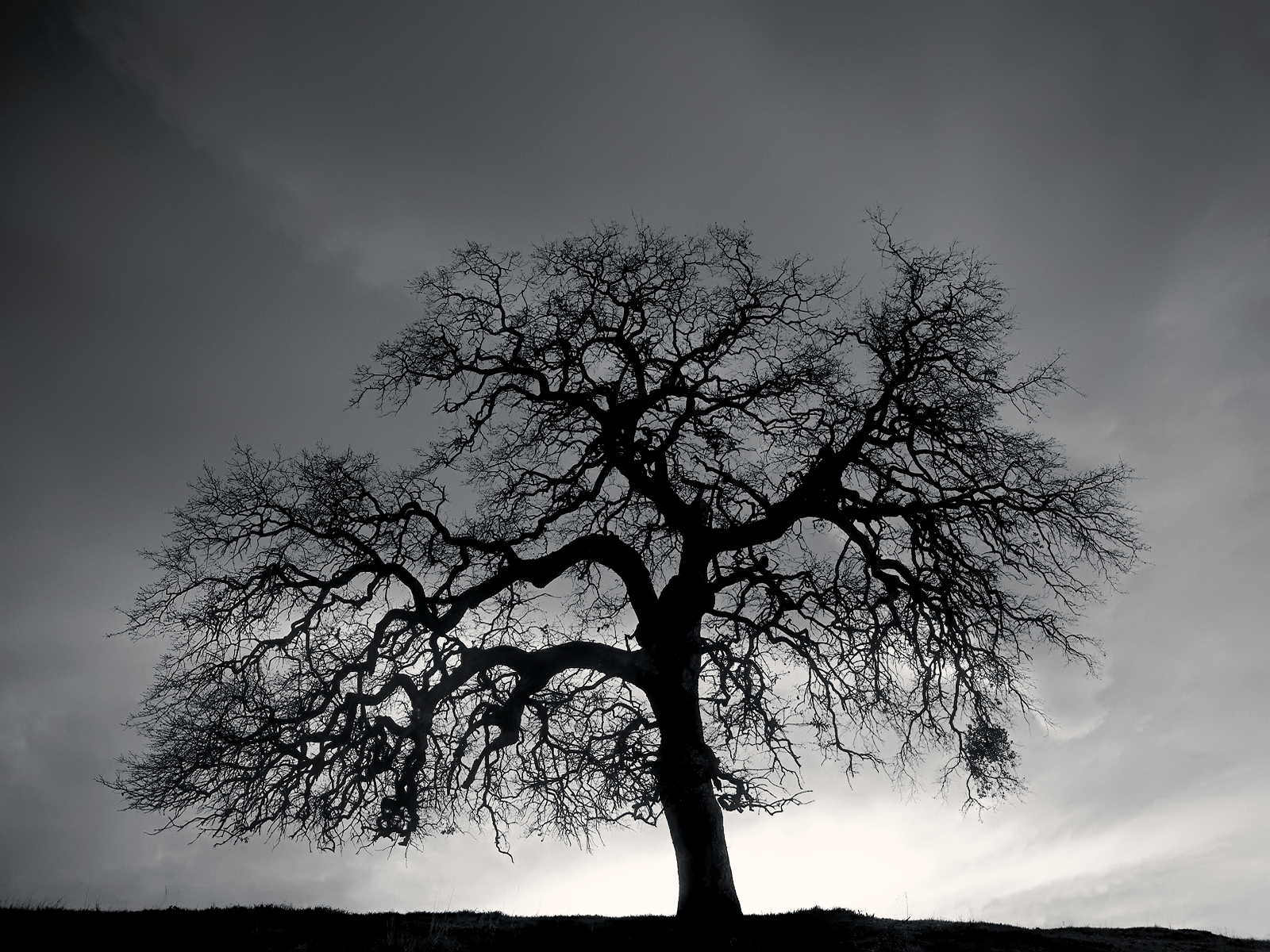 Black And White Images Of Trees 40 Cool Wallpaper 1600x1200