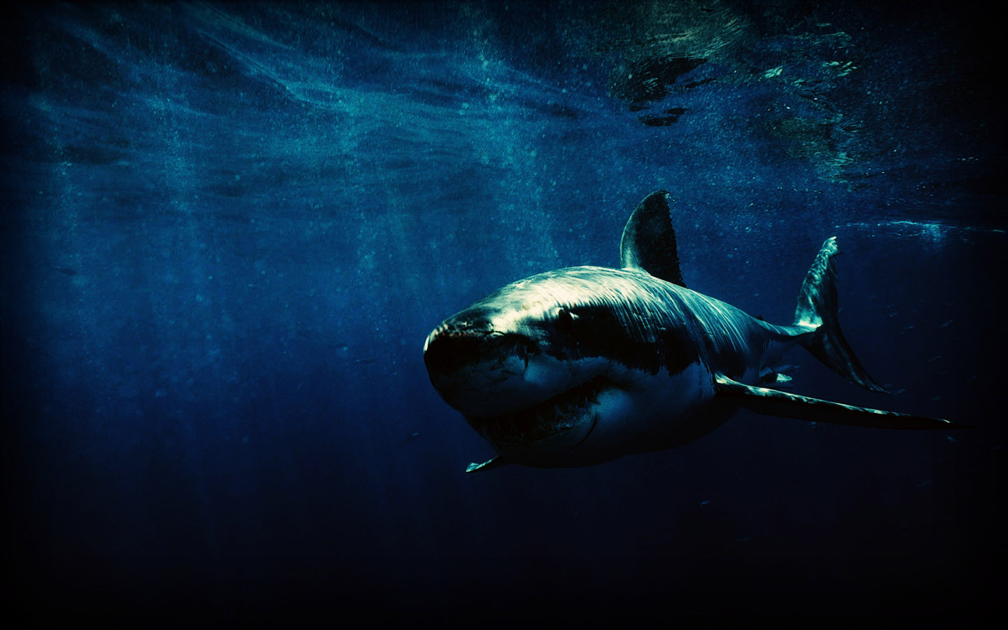 File Name 886628 Shark HD Wallpapers Backgrounds 1440x900