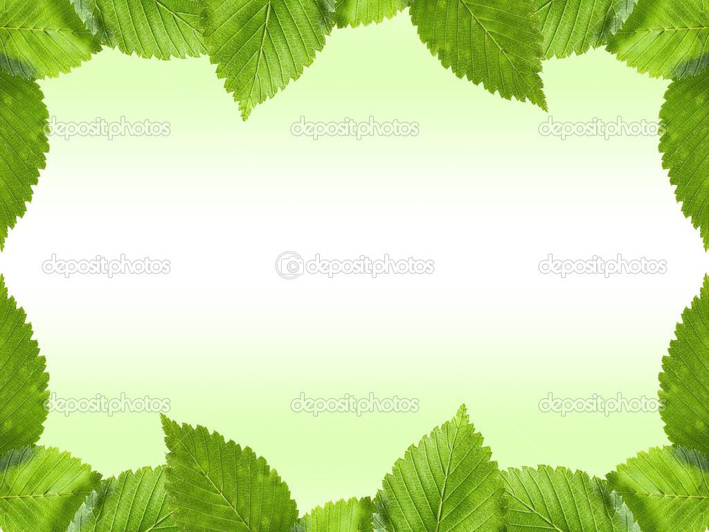 Green Leaf Wallpaper Border HD Wallpapers on picsfaircom 1024x768