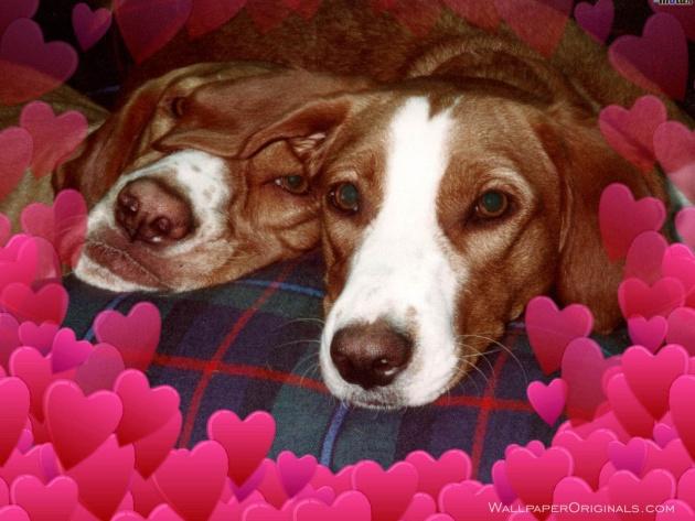 Free Puppy Valentine W...