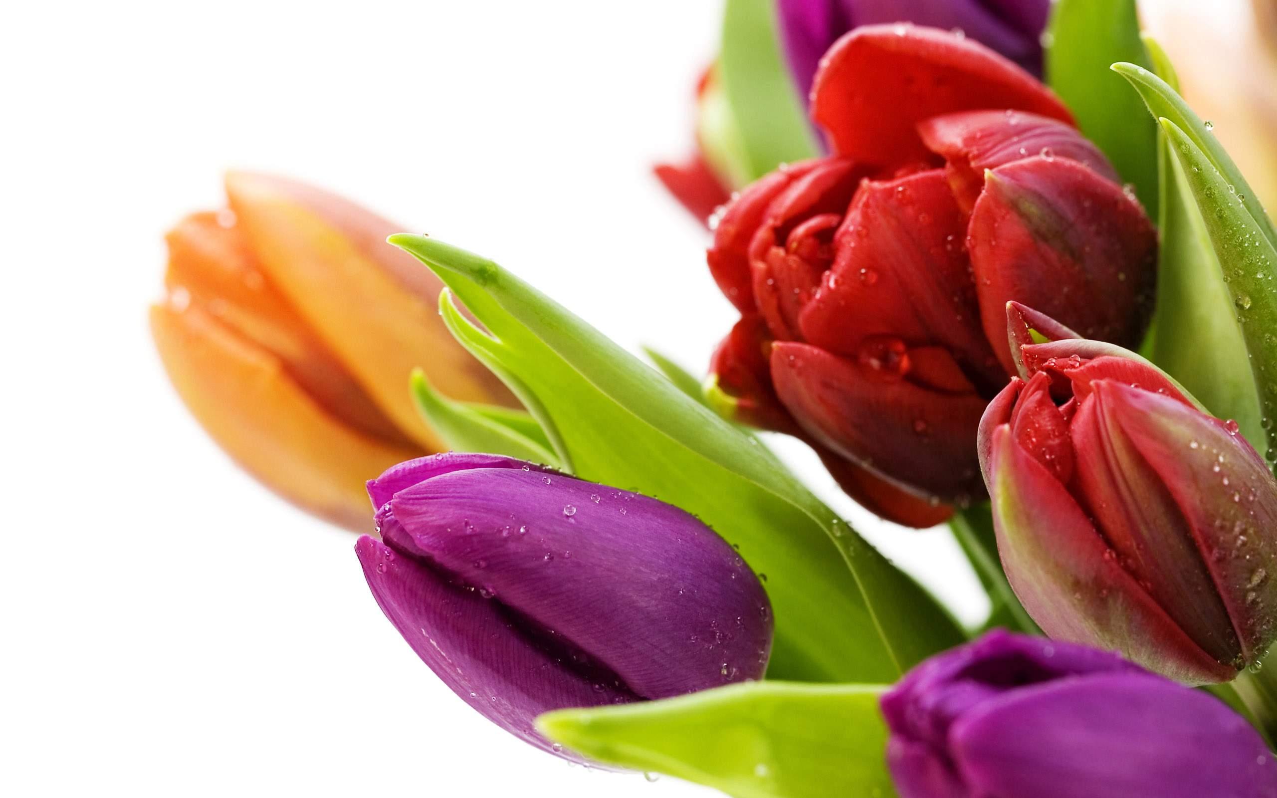 Beautiful Flower Wallpaper 10750 Hd Wallpapers in Flowers   Imagesci 2560x1600
