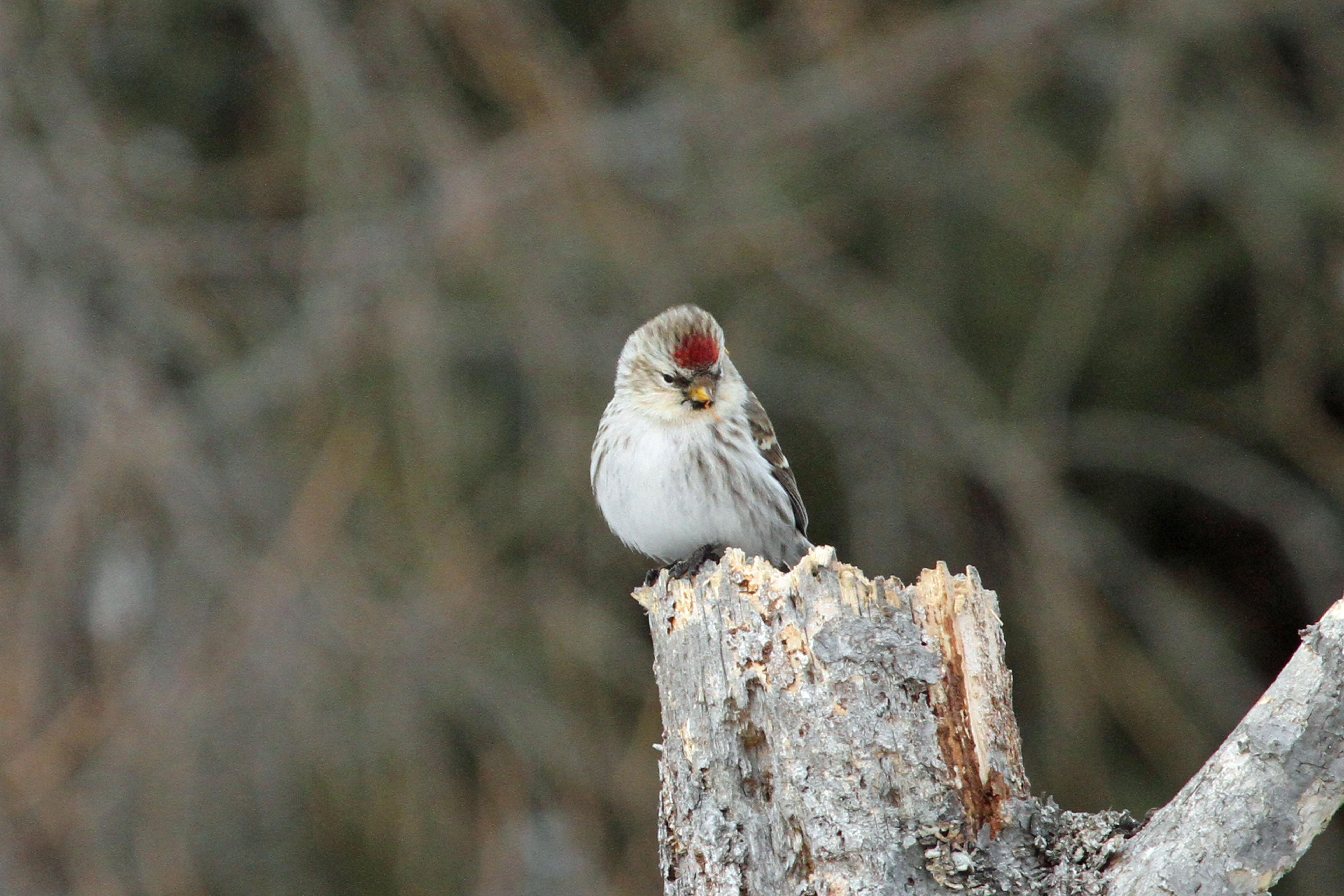 White and black short beak bird on tree branch at daytime hoary 5184x3456